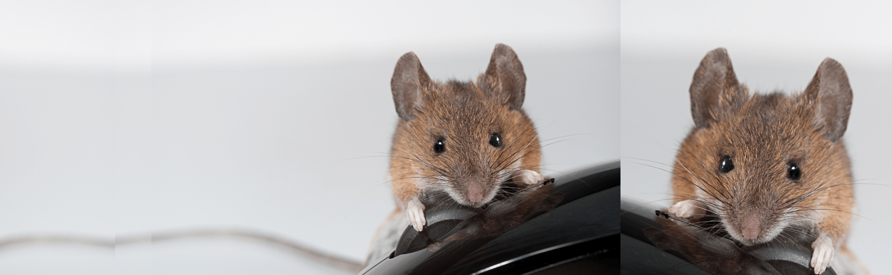 pest exterminators surrey second