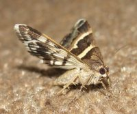 heat treatment for moths