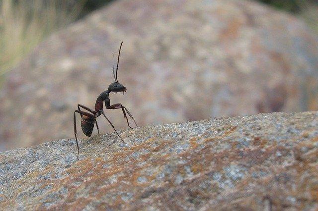 ant control in surrey