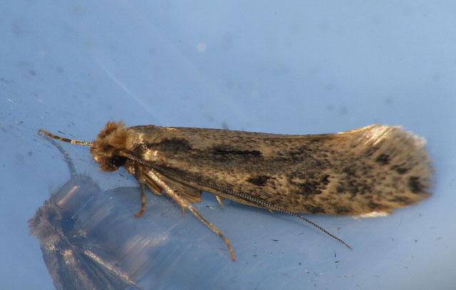 moth control in surrey