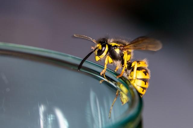 wasp control in surrey
