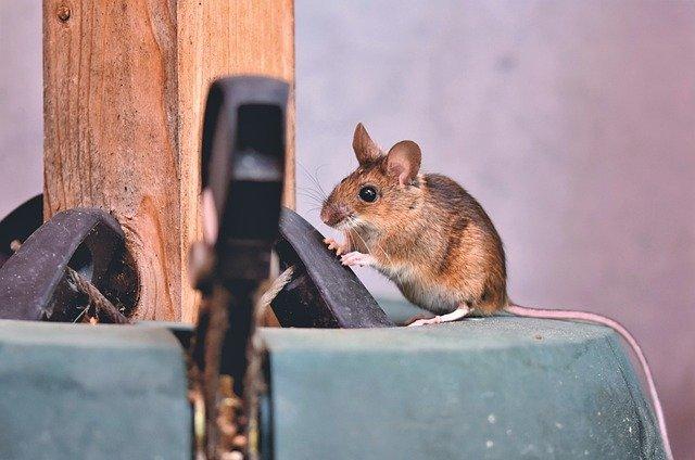 rodent control surreyv