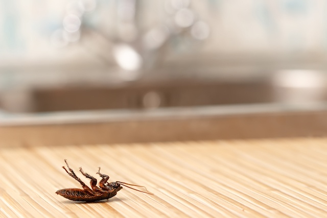 cockroach on floor