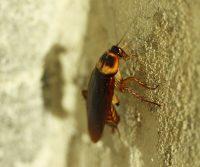cockroach on wall